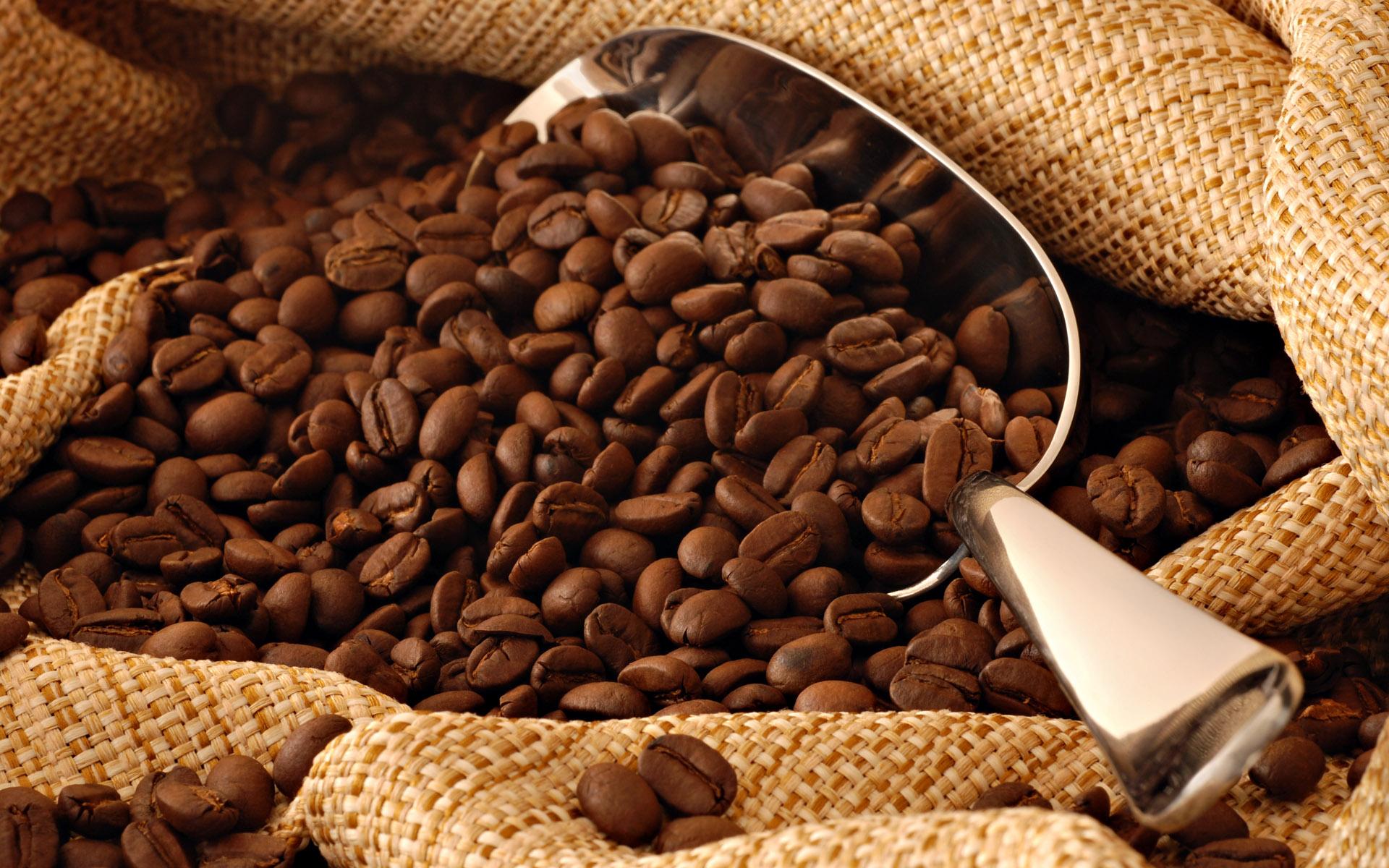 proses pembuatan kopi luwak
